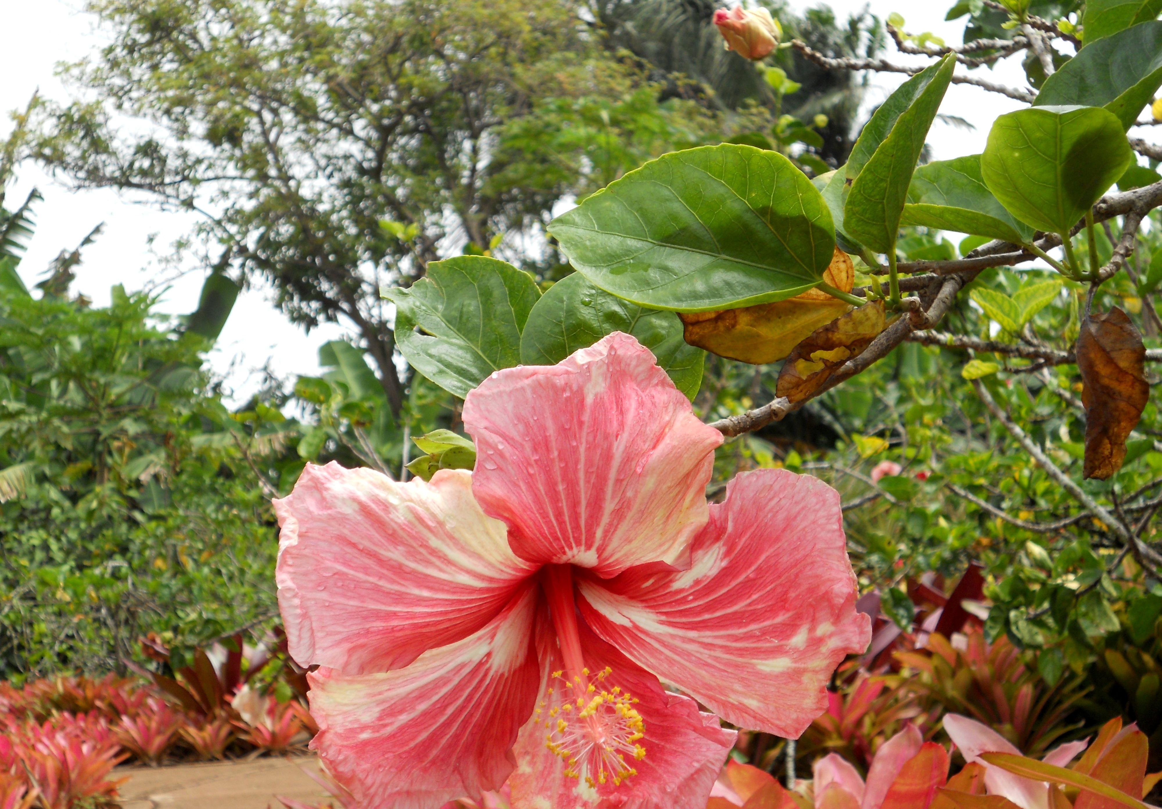 Flora and fauna in the hawaiian islands part 1 aarp online community this african native below has become a trademark of hawaii the bird of paradise with their orange and blue flowers nestle in green bracts looking somewhat izmirmasajfo Gallery