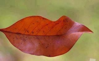 Beautiful weather even makes the leaves smile!