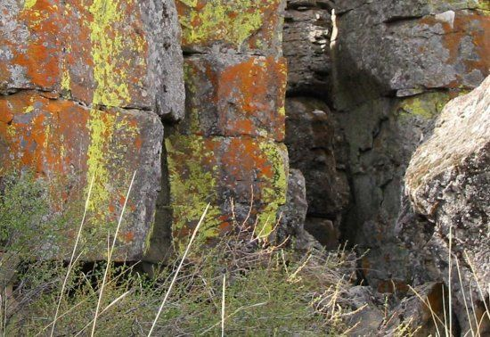 Lichens on sandstone appear to change color with seasonal lighting conditions. Wonderful!