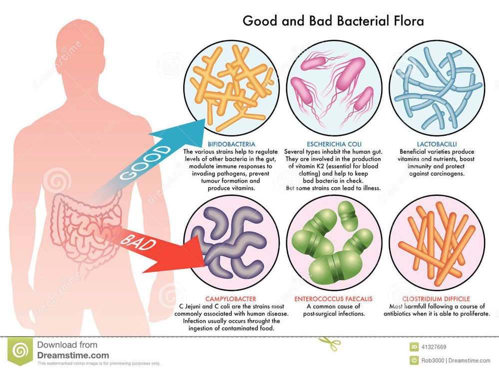 Not all bacteria is created equally.