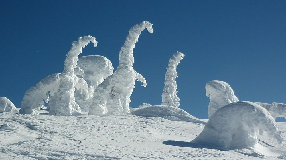 I see dinosaurs in the snow. What do you see?