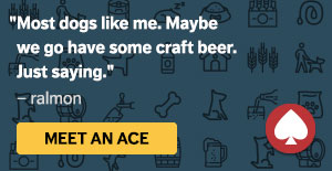 Meet an ACE