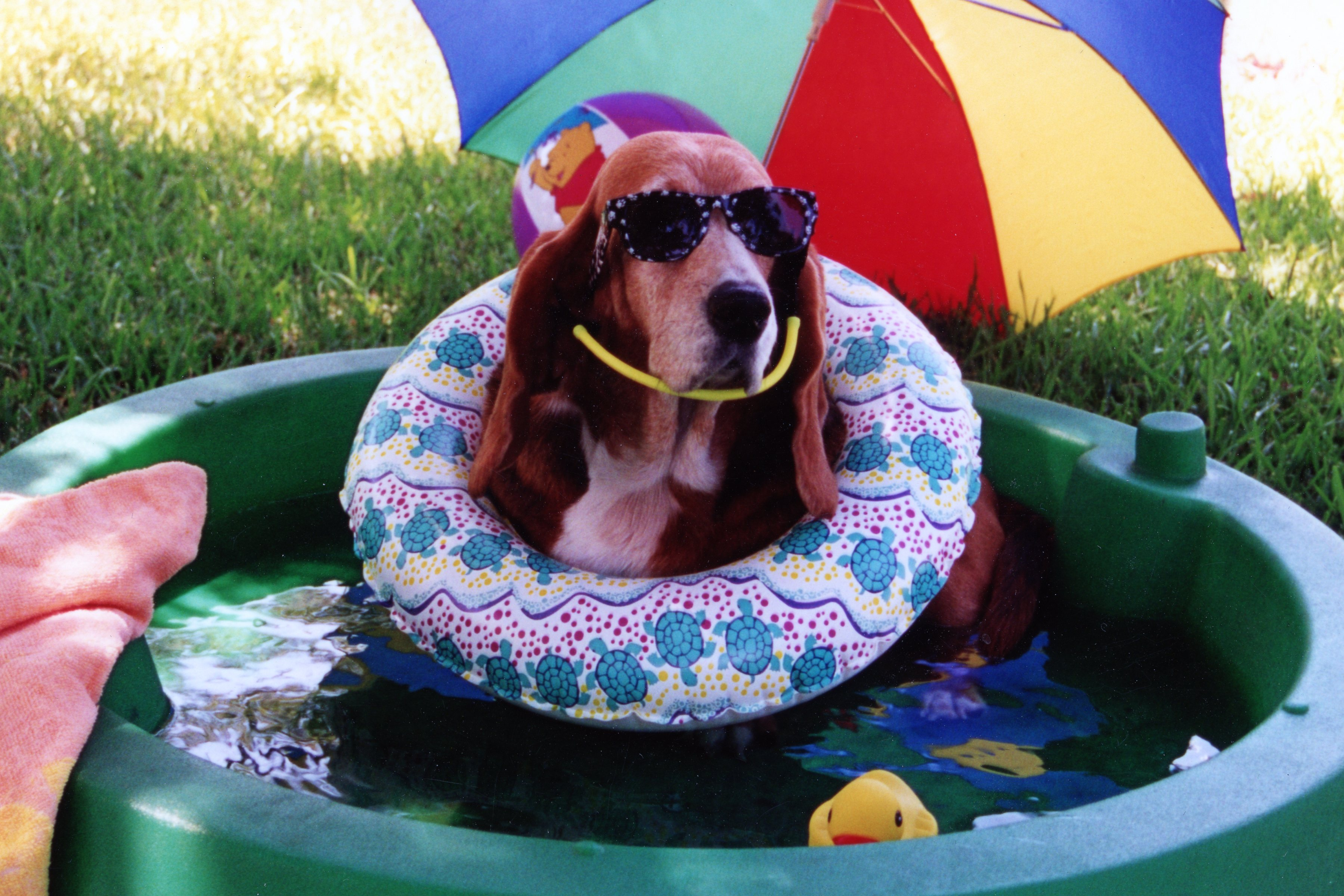"""Molly enjoying a """"staycation"""""""
