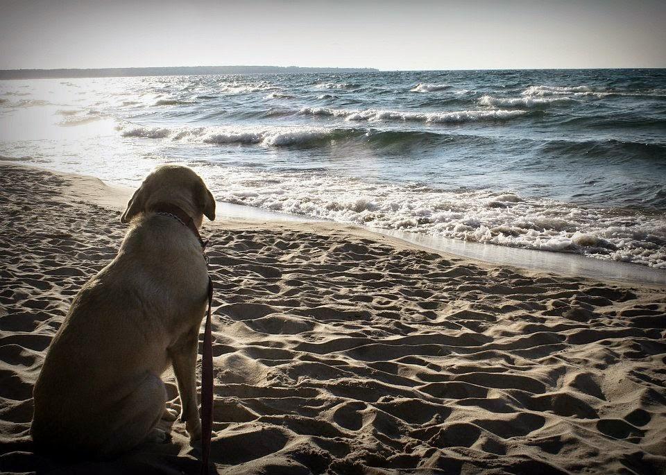 farley at the beach.jpg