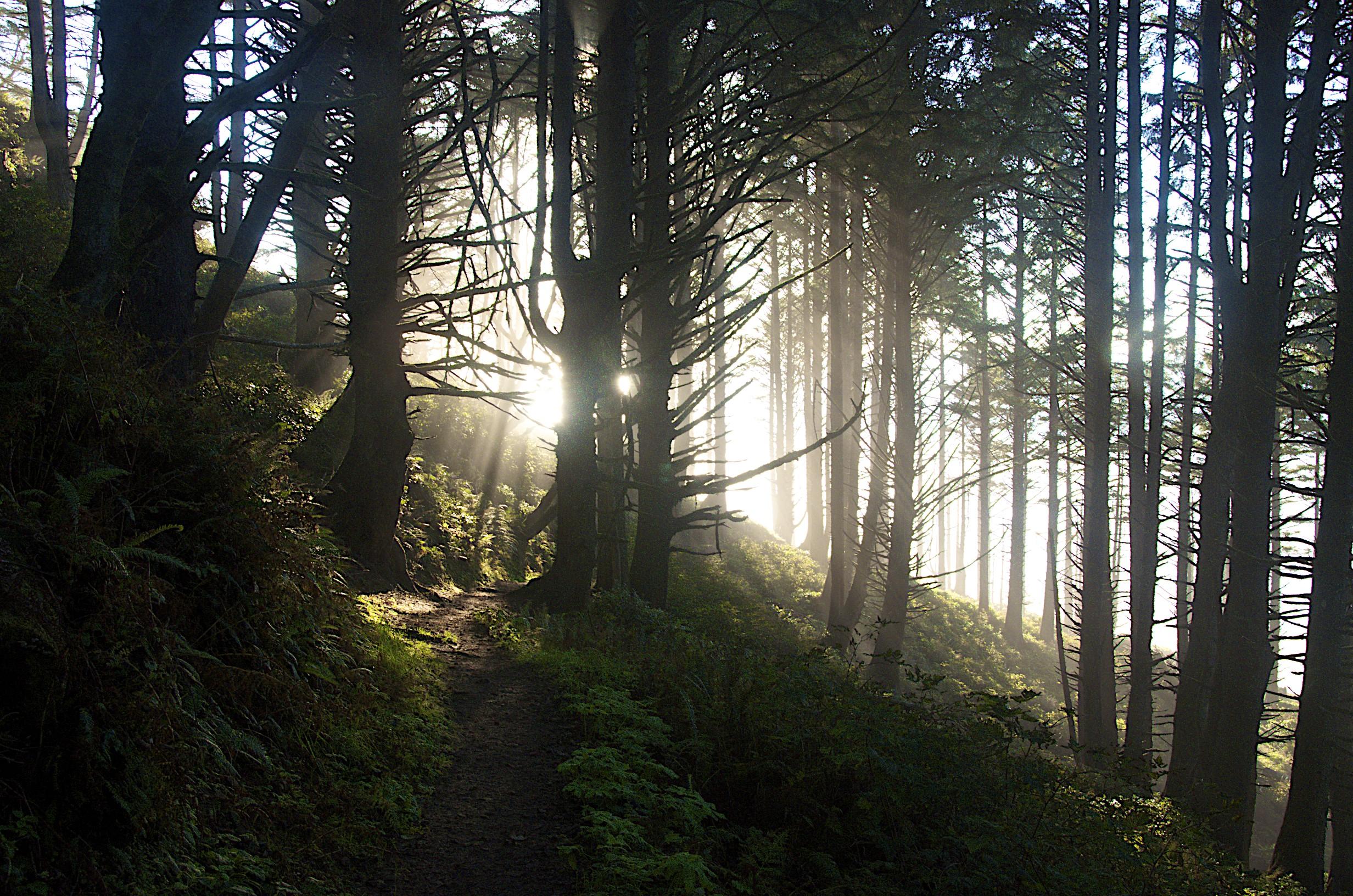 Coastal Trail - Oregon.jpg