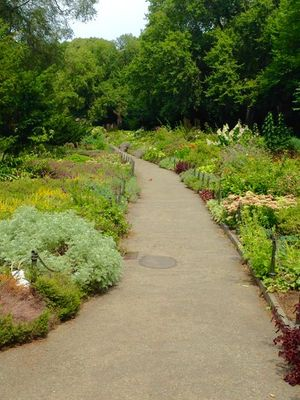 Wildflower Garden in Fort Tryon Park