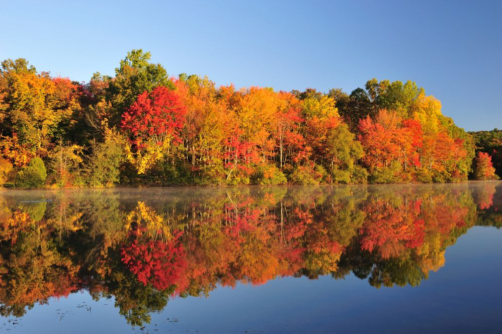 Fall-Foliage-Color.jpg
