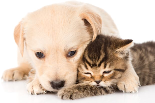 dog_hug_cat.jpg