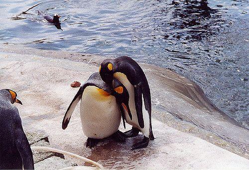 penguin hug.jpg