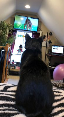 Delilah watches her fave team, the Pouncy Panthers, at Kitten Bowl V
