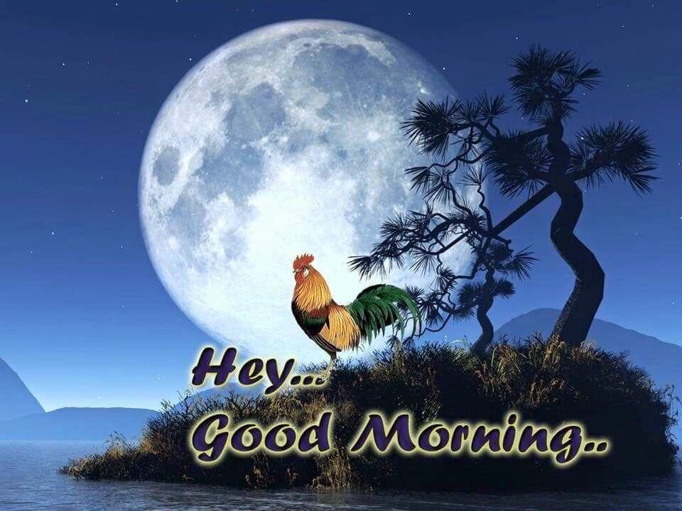 FB_IMG_1551891693510.jpg
