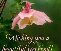 348130-Blooming-Flower-Beautiful-Weekend-Image.jpg