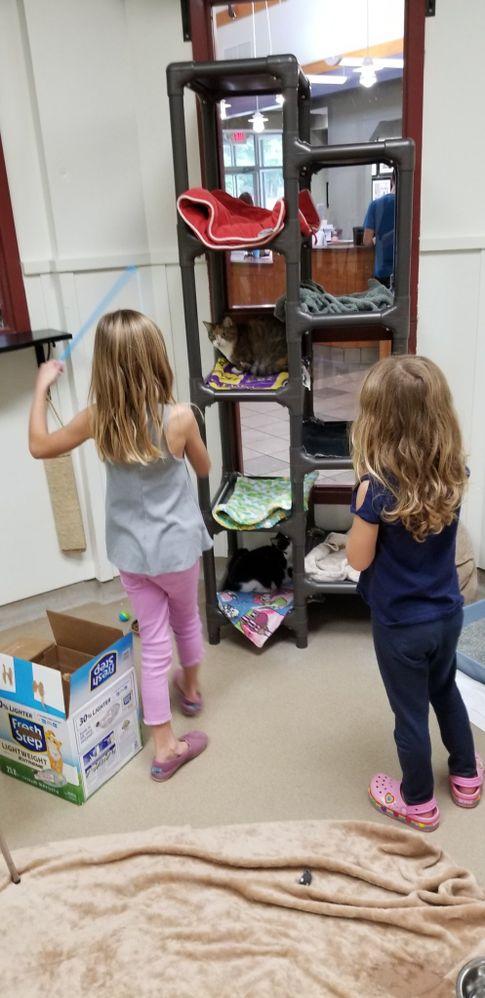 Girls in cat room