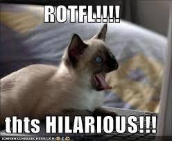 rotfl cat.jpeg