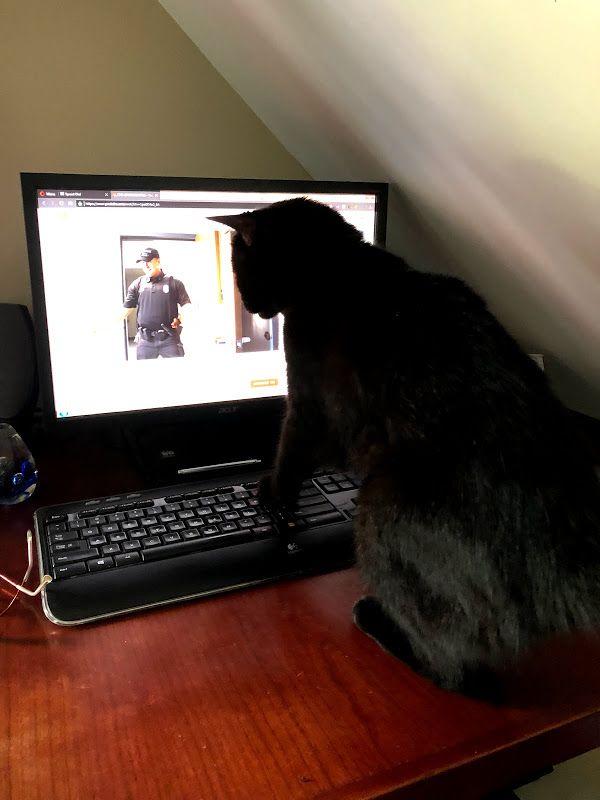 Delilah is fascinated with police lip sync challenge videos.