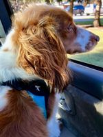 I LOVE riding in cars, wind in my hair!