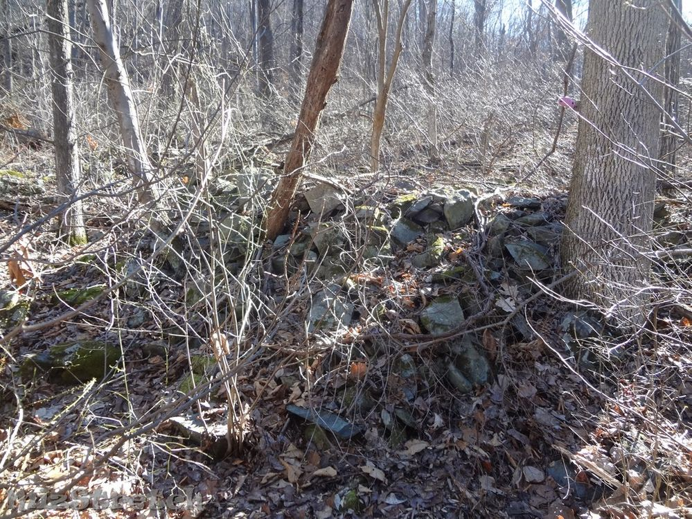 Possibly an outbuilding.  Very overgrown area.
