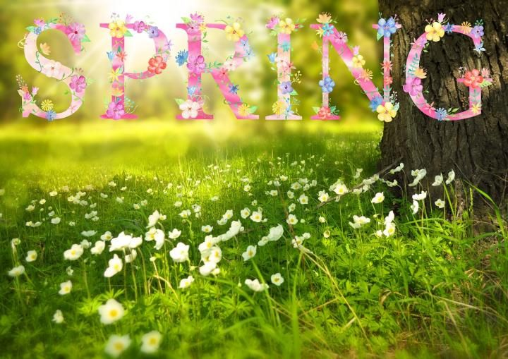 spring-1210194_1280.jpg