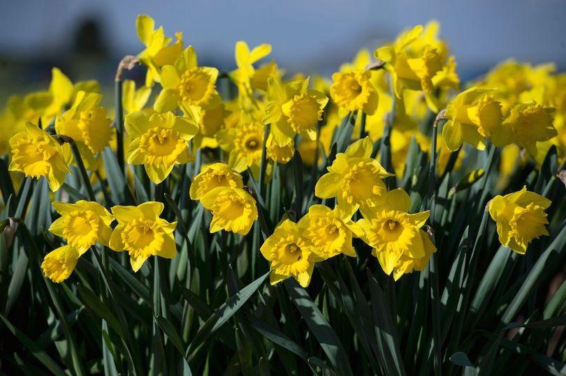 Spring-Equinox (1).jpg