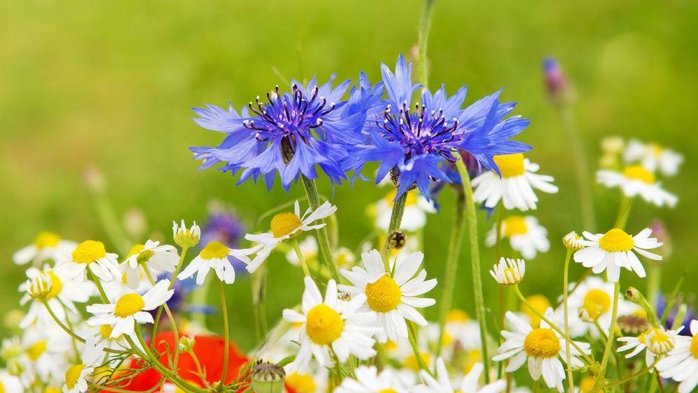 flowers-cover-photo-2.jpg
