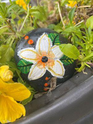 Rocks Tropical Flower.jpg