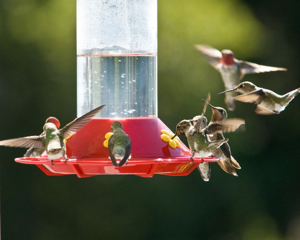 hummingbird-feeder-royalty-free-image-85152040-1566268108.jpg