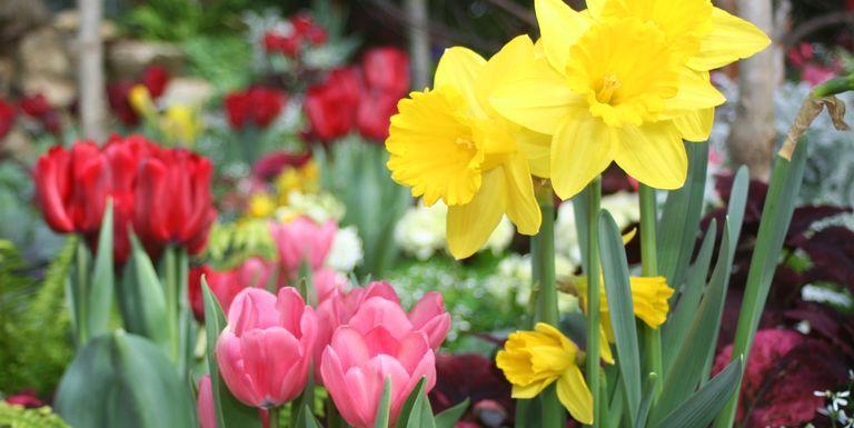 spring-flowers-royalty-free-image-124010894-1553034608.jpg