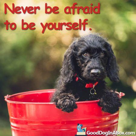 dog-quotes-black-puppy-bucket-800x800-450x450.jpg