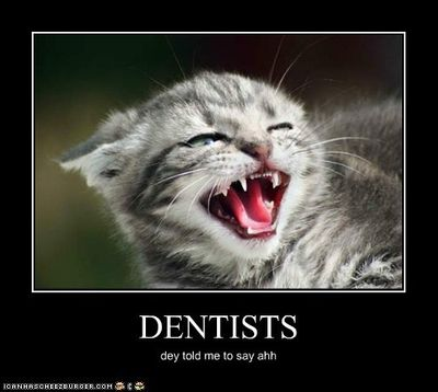 dentists and cats.jpg