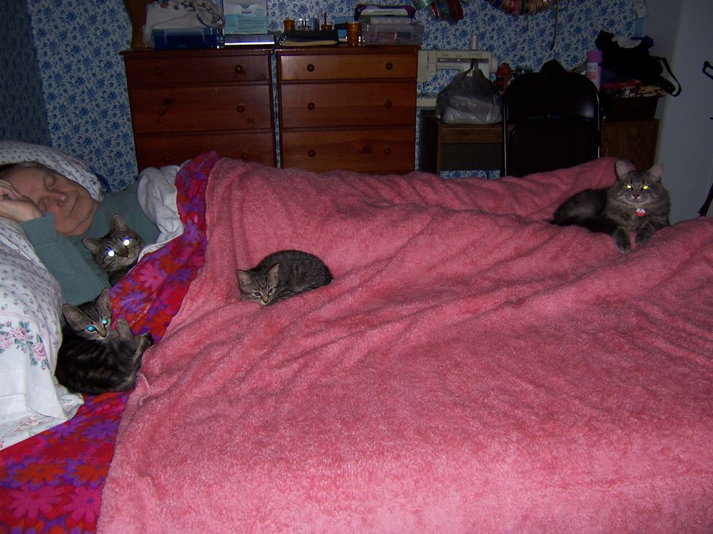 All 4 cats sleeping on bed with Roger.JPG
