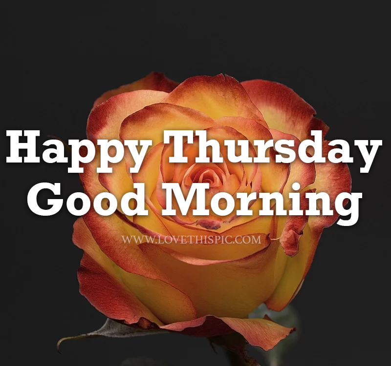 370928-Open-Rose-Happy-Thursday-Good-Morning.png