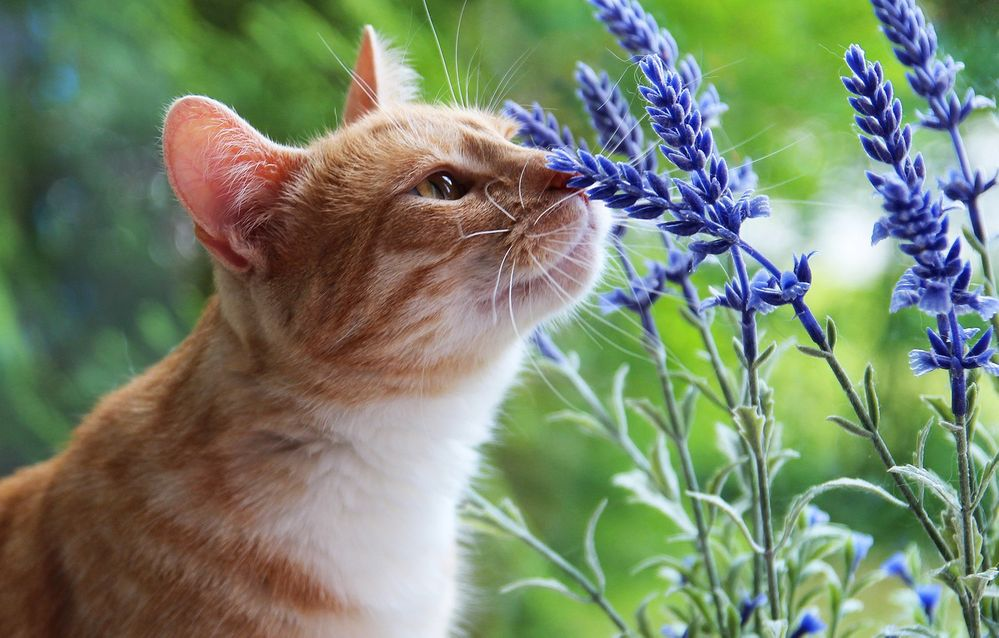 Take time to stop and smell the flowers!