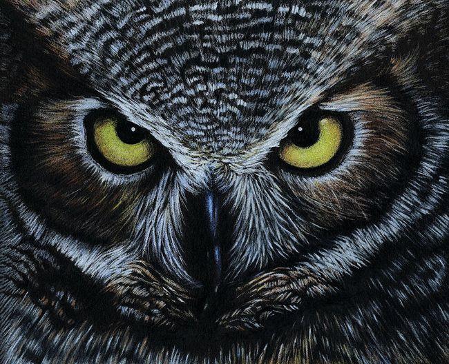owl-natasha-denger.jpg