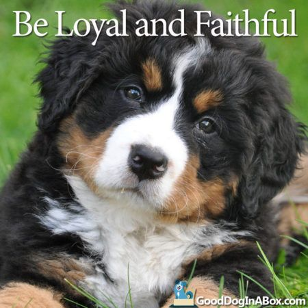 dog-quote-bernaise-mountain-dog-800x800-450x450.jpg