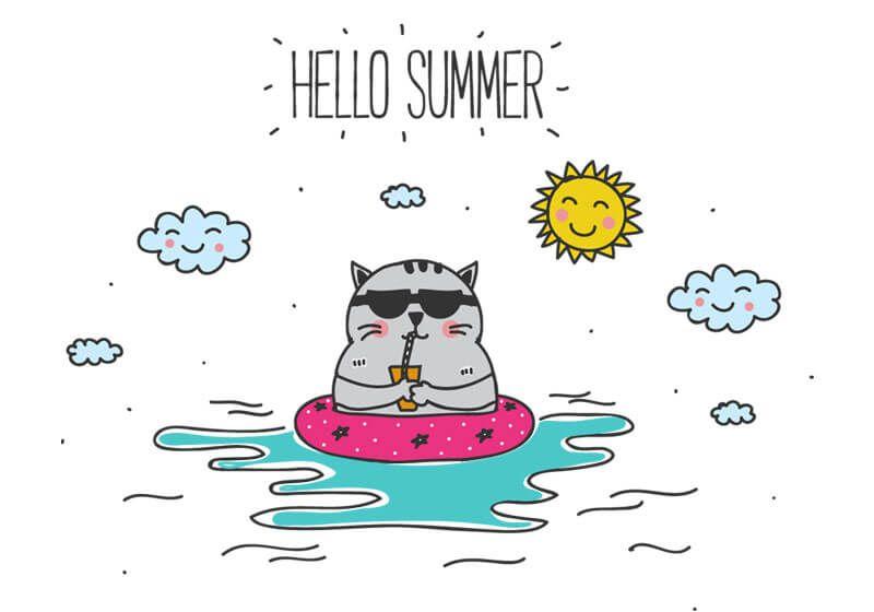 hello summer cat.jpg