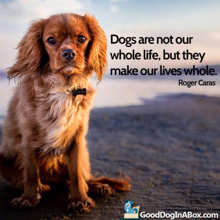 dog-quotes-cavalier-king-charles-spaniel-450x450.jpg