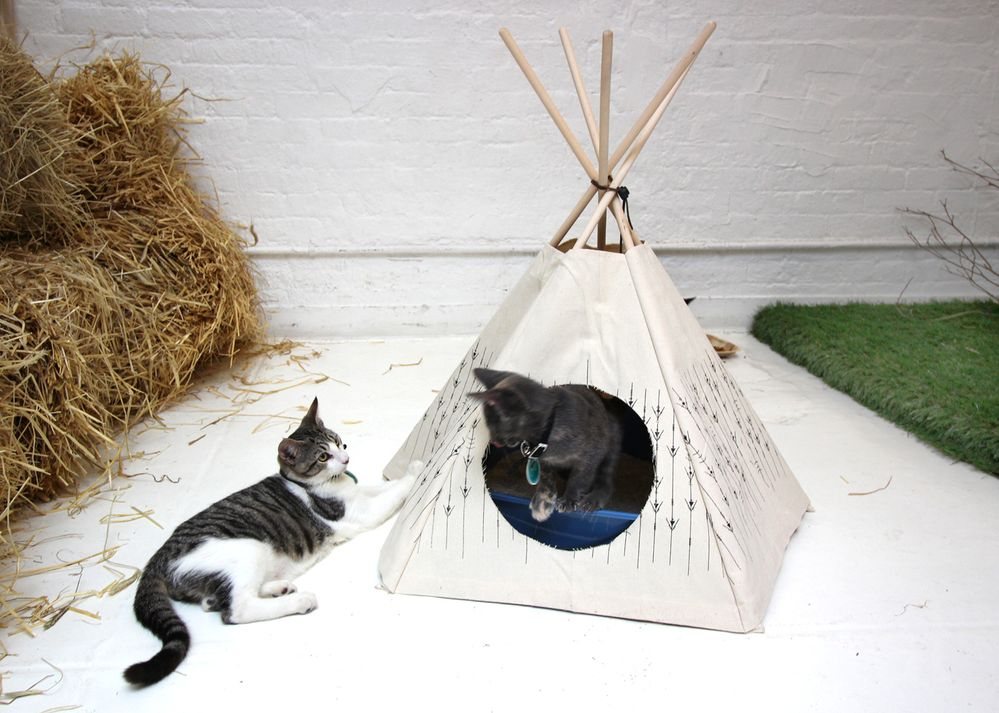 It's summer. Let's go camping!