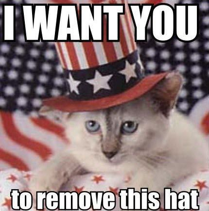 Uncle sam cat.jpg