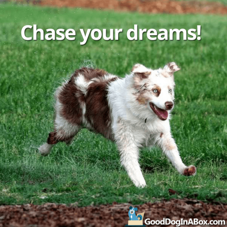 dog-quotes-chase-dreams-sm-450x450.png