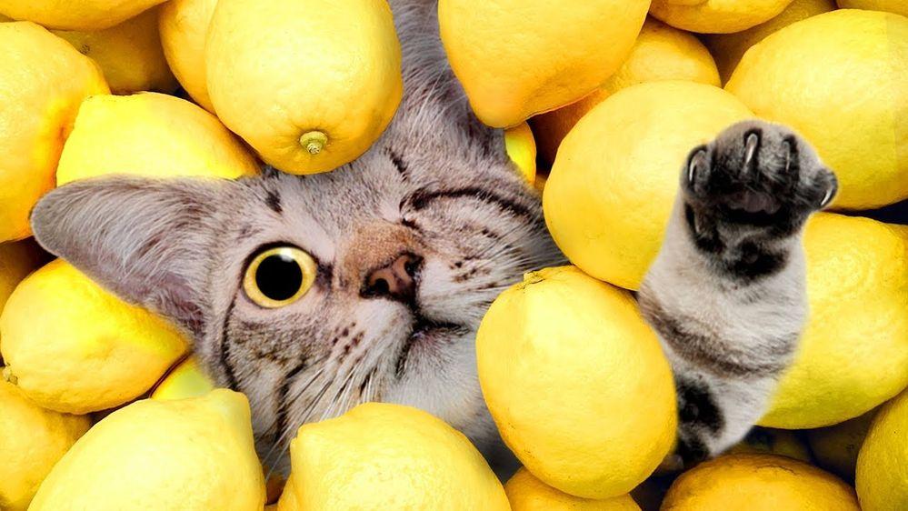 Anyone for lemonade?