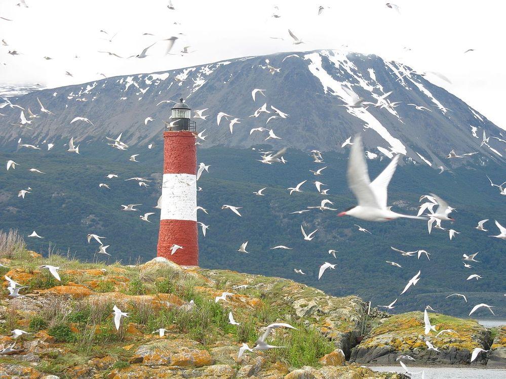 Sea_birds_and_Lighthouse.jpg