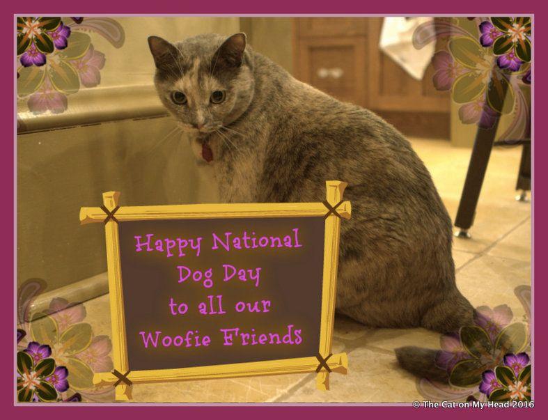 cat on national dog day.jpg