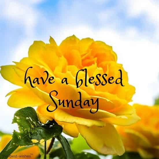 good-morning-everyone-have-a-blessed-sunday-with-yellow-roses.jpg