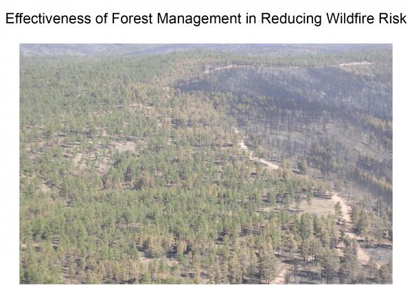 Forests_fuel_treatment_V4.png
