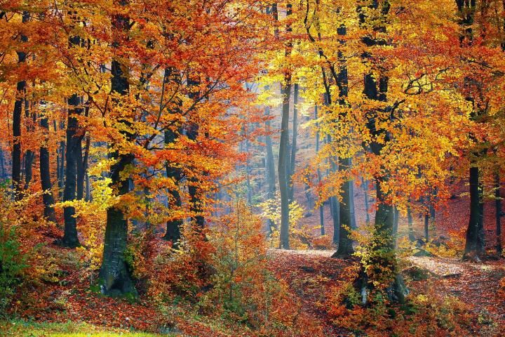 autumnal-equinox-fall_full_width.jpg