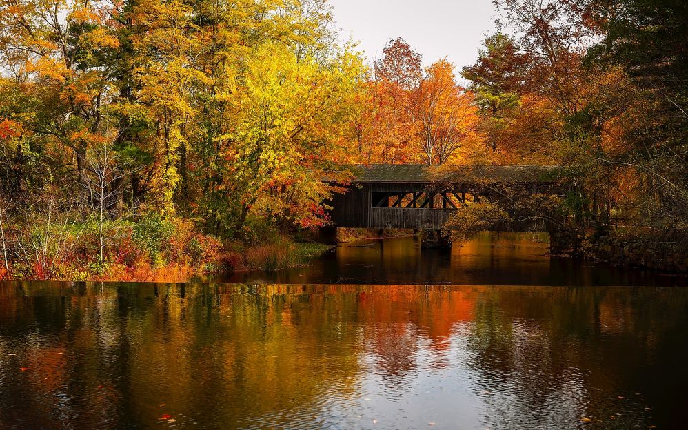 fall-bridge.jpg