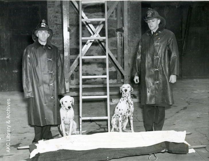dalmatians_firedept_policedogs1943_wm-1-min.jpg