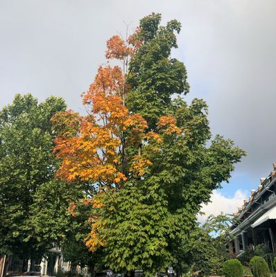 Happy Autumn!