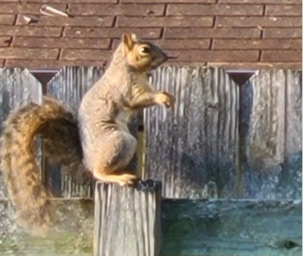 SquirrelSittingonPostUpright.jpg