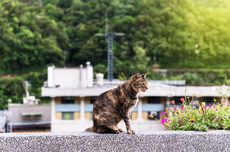 brown-cat-houtong-village-ruifang-district-new-taipei-taiwan-101903782.jpg